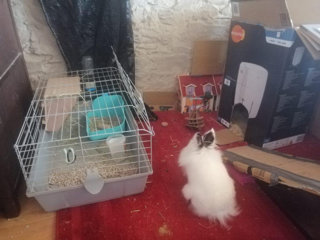 conejo en casa con alfombra