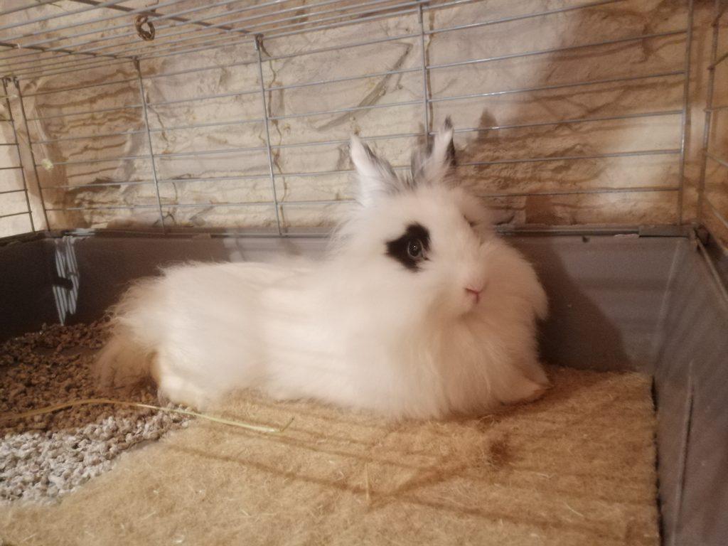 conejo blanco y negro tumbado en cama de cañamo