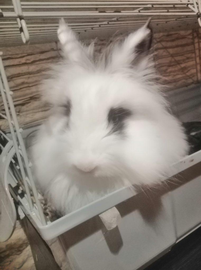 conejo blanco y negro en jaula grande