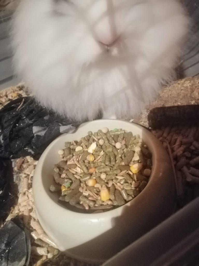conejo blanco y negro junto a comedero relleno con pienso mala calidad marca mercadona