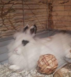 conejo_blanco_y_negro_con_pelota_de_juguete comestible[1]