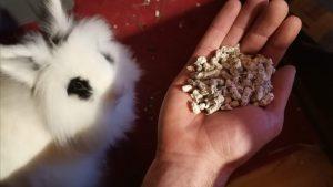 conejo blanco y negro al lado de pellets de papel prensado para conejos