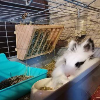 conejo blanco y negro tumbado_junto_a_comedero_de_pienso_y_dispensador deheno[1]