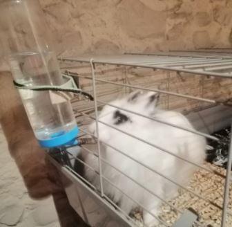 sujecion_bebero_conejo[1]