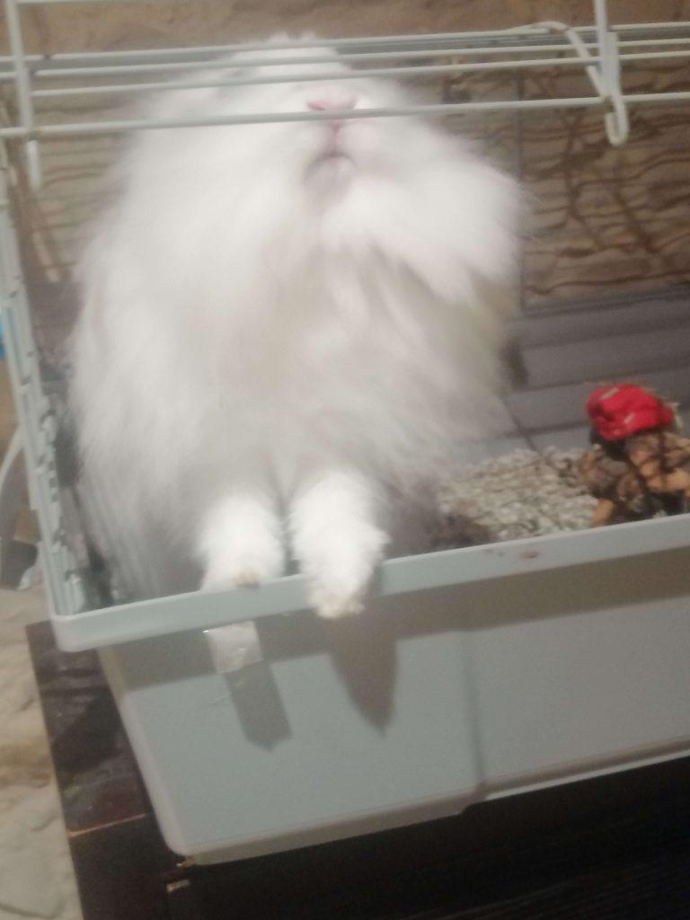 conejo se pone de pie en jaula con la altura adecuada