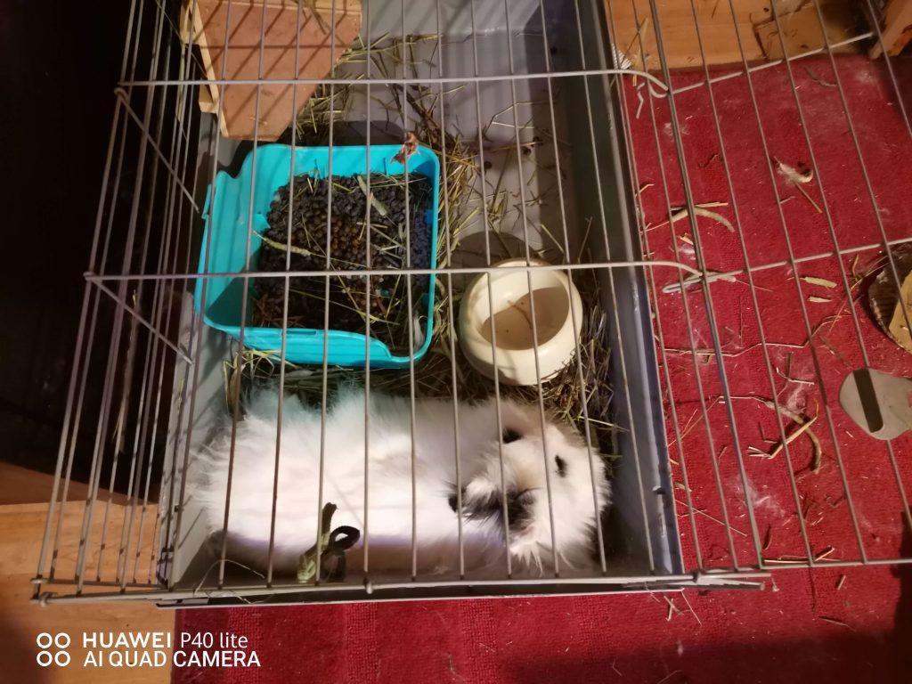 conejo tumbado en jaula con la anchura adecuada