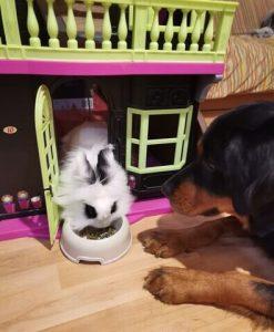conejo comiendo dentro de casa