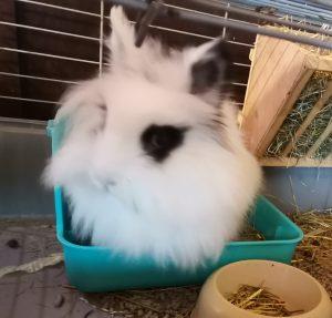 conejo blanco y negro usando bandeja esquinera rellena de sustrato de papel