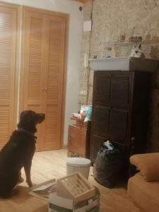 perro negr observa a un conejo blanco y negro dentro de su jaula