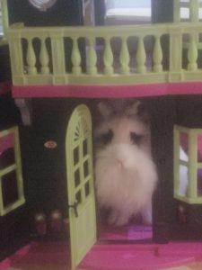 conejo blanco y negro dentro de casa