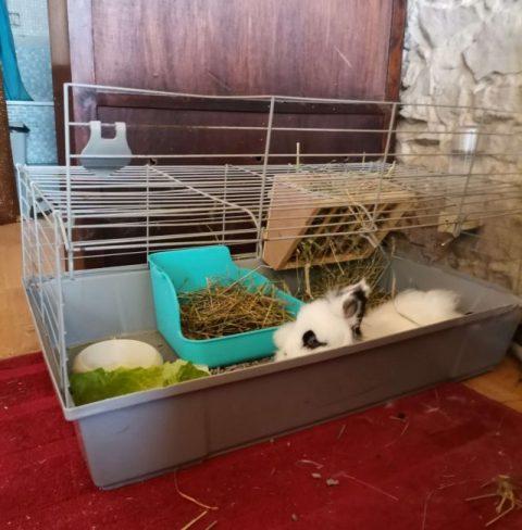 conejo blanco y negro dentro de jaula con comedero, esquinera y dipensador de heno
