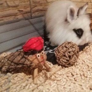 lecho de madera para conejos